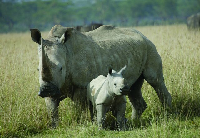 option finance corporate responsibility rhino